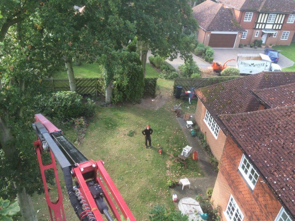 Tree Surgeon in Essex