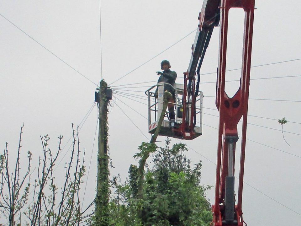 Tree Surgeon in Colchester