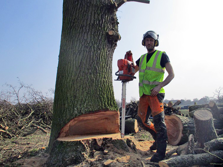 Tree Felling Colchester