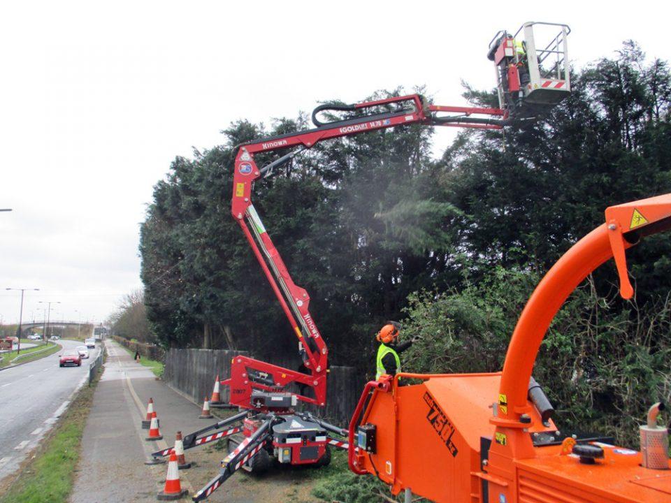 Tree Services Suffolk