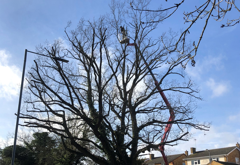 Colchester Tree Services